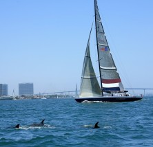 Dolphins in San Diego Bay