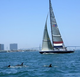 Dolphins-in-the-bay-with-Stars-Stripes-USA-11