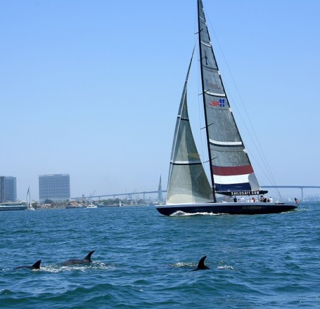Dolphins In San Diego Bay Sandiegosailing Com